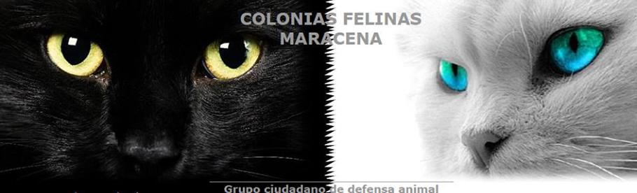 Colonias Felinas Maracena